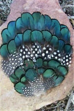 3 Pc. B Quality109  Amherst Pheasant Feather Pads    US Seller
