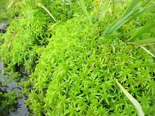Live Sphagnum Moss: for Orchids, Terrariums, Controlling pH, Starting Seeds, Mor