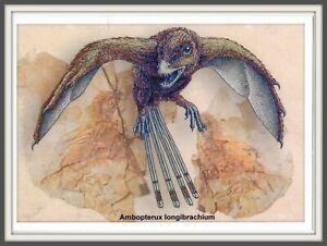 DINOSAUR Scansoriopterygidae CHINA Hebei 辽宁 Liaoning 河北 Prehistoric BIRD card #5