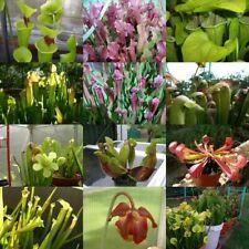 50 à 200 graines seeds Sarracenia mélangées mixed carnivore carnivorous plant