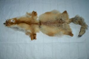 1PC Tanned Red Fox pelt, ideal for sewing, soft tan, great value #4 IN100