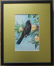 Black Bird print - Basil Ede wall art, 20''x16'' frame, garden birds