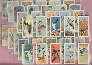 Brooke Bond Canada, Birds of North America 1962