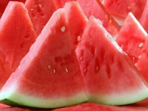Rare Seeds Watermelon Knyazhich Non GMO Heirloom Melon Seed