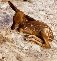 Beautiful Whitetail Deer Fawn Professional Taxidermy Mount Decor Wildlife Art