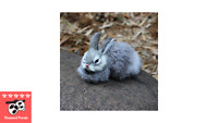 15CM Mini Cute Rabbits Plush, Brand New - Diamond Panda Plush