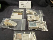 Fossil Collection Dinosaur Bone 6 Different Dinosaur Bone Collection Option 3