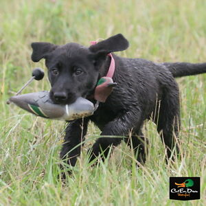 AVERY GREENHEAD GEAR GHG SPORTING DOG ATB EZ BIRD TEAL NATURAL DUMMY BUMPER