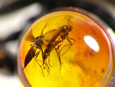 8,25 US Nice Baltic Amber 925 Sterling Silver Ring with Insect Two GNAT