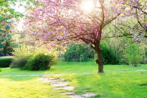 10x8ft Vinyl Nature Spring Pink Flowering Tree Photo Background Studio Backdrop