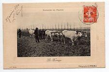 AGRICULTURE CAMPAGNE scenes champetres attelage de 8 boeufs le hersage
