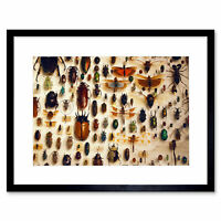 NATURE PHOTO TAXIDERMY VARIED INSECT CABINET 12X16 INCH ART PRINT POSTER HP2258