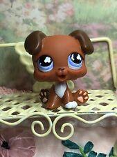 Littlest Pet Shop~#657~Baby Boxer~Puppy Dog~Brown Chocolate~Purple Clover Eyes