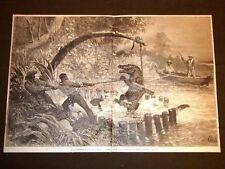 La cattura caccia di un alligatore al laccio Florida Stati Uniti d'Amrica o USA
