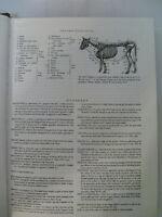 Hebrew English Edition Of The Babylonian Talmud Tractate Hullin Cashdan M.A.