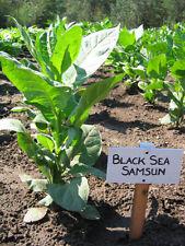 Havanna Latakia Burley Virginia 4000 tobacco seeds