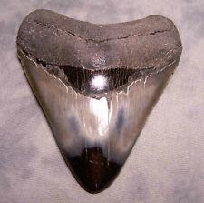 "MEGALODON SHARK TOOTH SHARK TEETH STUNNING 4 3/16"" HUGE DIAMOND POLISHED FOSSIL"