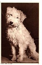 Ready When You Are - West Highland White Terrier - Dog Postcard