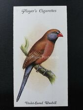 No.43 VIOLET EARED WAXBILL - Aviary and Cage Birds by John Player 1933