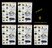 5er Set Mineralien - Fossilien Sammlung, Edelsteine und Fossilien aus aller Welt