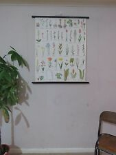 VINTAGE PULL ROLL DOWN BOTANICAL SCHOOL WALL CHART  POSTER OF FLOWERING PLANTS I