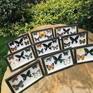 Wood Framed Real Butterfly Insect Specimen Taxidermy Display Collection Art wall