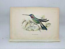 DELUXE ED Hand-colored Plates 1840 Jardine History Hummingbirds #17 White Stripe