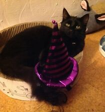 Alcide asks you to donate a Halloween dinner for a cat - Ceredigion Cat Rescue