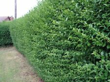 Loam Partial Shade Medium Watering Shrubs & Hedges