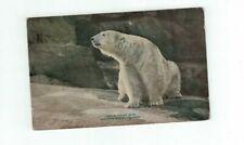 Antique Animal Post Card New York Zoo Polar Bear