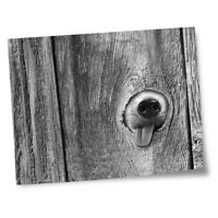 "8x10"" Prints(No frames) - BW - ny Dog in the Fence  #36092"