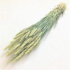 DRIED WHEAT BUNCH TALL STEMS FLOWER ARRANGING RUSTIC WEDDING HARVEST 70cm LONG