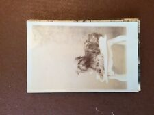 G1e postcard unused edwardian dog on a stool