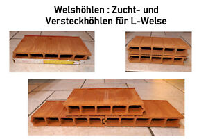 L-WELSHÖHLE 5-fach, Antennenwels, Ancistrus, Tone, Breeding + Hide, Open, 14 CM