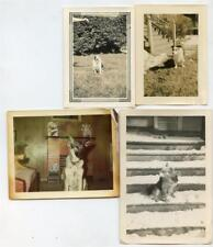 DOGS Lot of 9 Vintage DOG Photos Best Friend Fur Babies Canine Companions