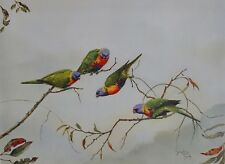 "Josephine Anne Smith, "" Playful lorikeets "" Australian Birds, Lorikeets"