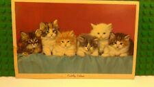 Unused Vintage Postcard Kittens