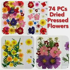 Dried Pressed Flowers for Resin Diy