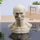 NEW 10cm Human Model Anatomy Skull Head Muscle Bone Medical Artist Drawing