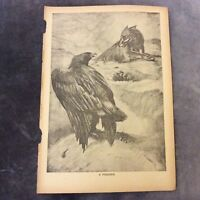 Vintage Book Print - A Poacher