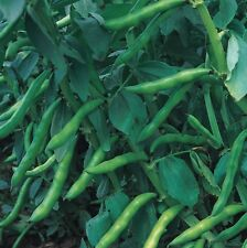 vegetal - Amplio Judía Aguadulce - 30 Semillas