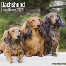 Longhaired Dachshund Calendar 2021 Premium Dog Breed Calendars