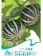 FD1237 Rare Mini Pumpkin Cucurbita Seed Vegetable Seed ~1 Pack 8 Seed~ Free Ship