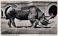 """BERLIN ZOO Zoologischer Garten """"Mtoto"""" Afrikanisches Doppelnashorn 20/30er Ja."""