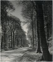Kunstfoto, photographie d'art. Waldweg in der Bretagne, Großes Orig-Foto um 1935