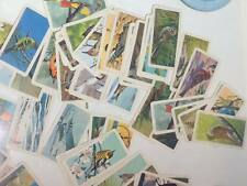 Vintage Red RoseTea  - Blue Ribbon collector cards lot of 115