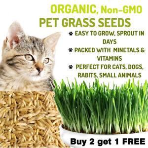 100% Natural Organic Sweet Oat Grass Seeds Cat Rabbit Pet Fresh Seeds UK