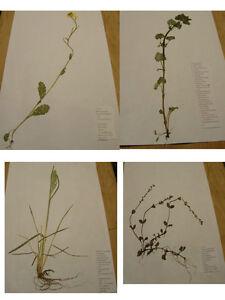 R Herbarium 5 Pflanzen zum Auswählen * Lieferdauer i d 1 Tag * PTA//SCHULE//UNI