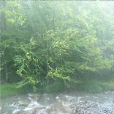 D053  SOUNDS OF NATURE TORRENTIAL RAIN IN A TROPICAL FOREST AUDIO CD