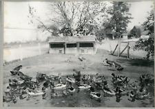 Campagne française, élevage de canards, vers 1910 Vintage silver print Tirage